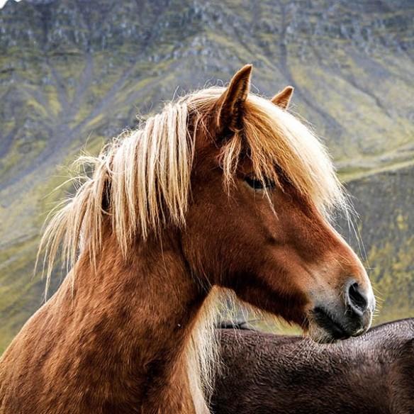Pour le cheval