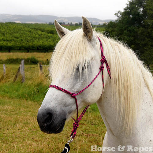Prince, le poney Horse&Ropes